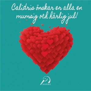calidris_jul